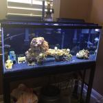 55 gallon reef tank
