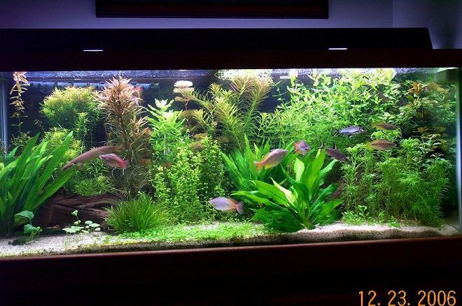 Aquarium plants in sand plants and sand aquarium advice for Sand for fish tank