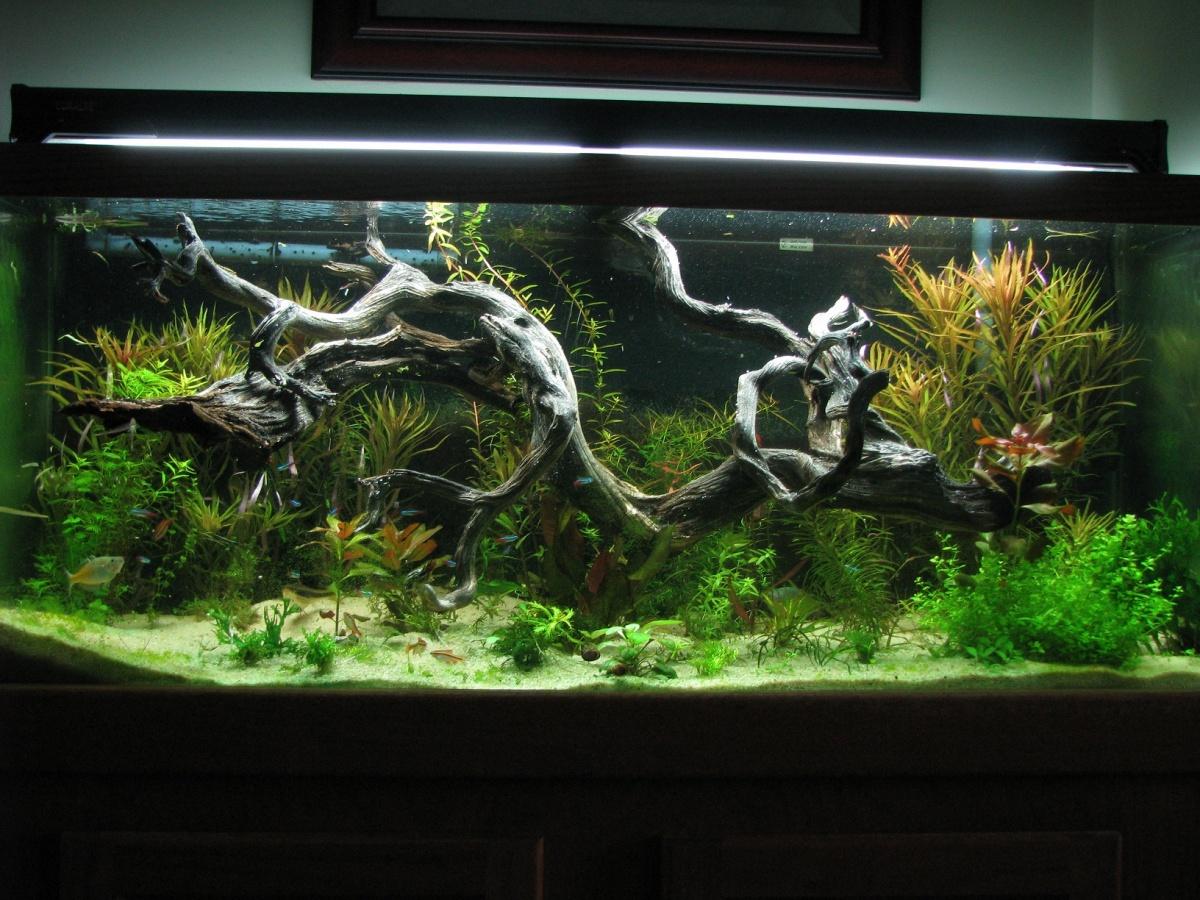 Декорации в аквариум своими рукам