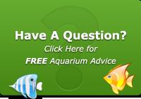 Have a Aquarium Question?