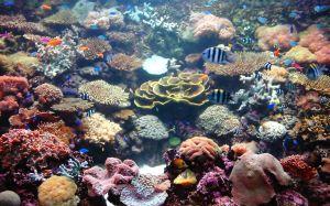 662110_coral_garden