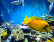 827787_fish_in_a_tank_1