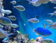 827788_fish_in_a_tank_2