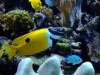 827789_fish_in_a_tank_3