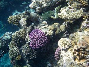 902546_underwater coral