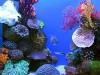 919850__aquarium_