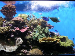 807443_aquarium
