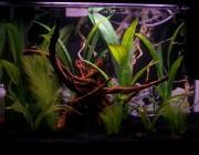 freshwater_aquarium
