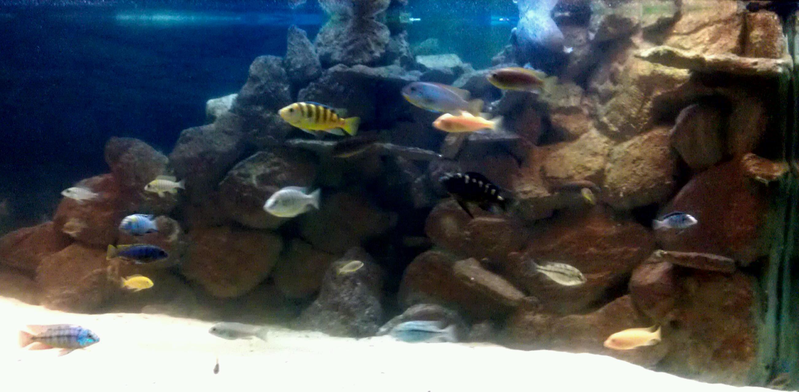 3D freshwater aquarium backgrounds Aquarium Advice