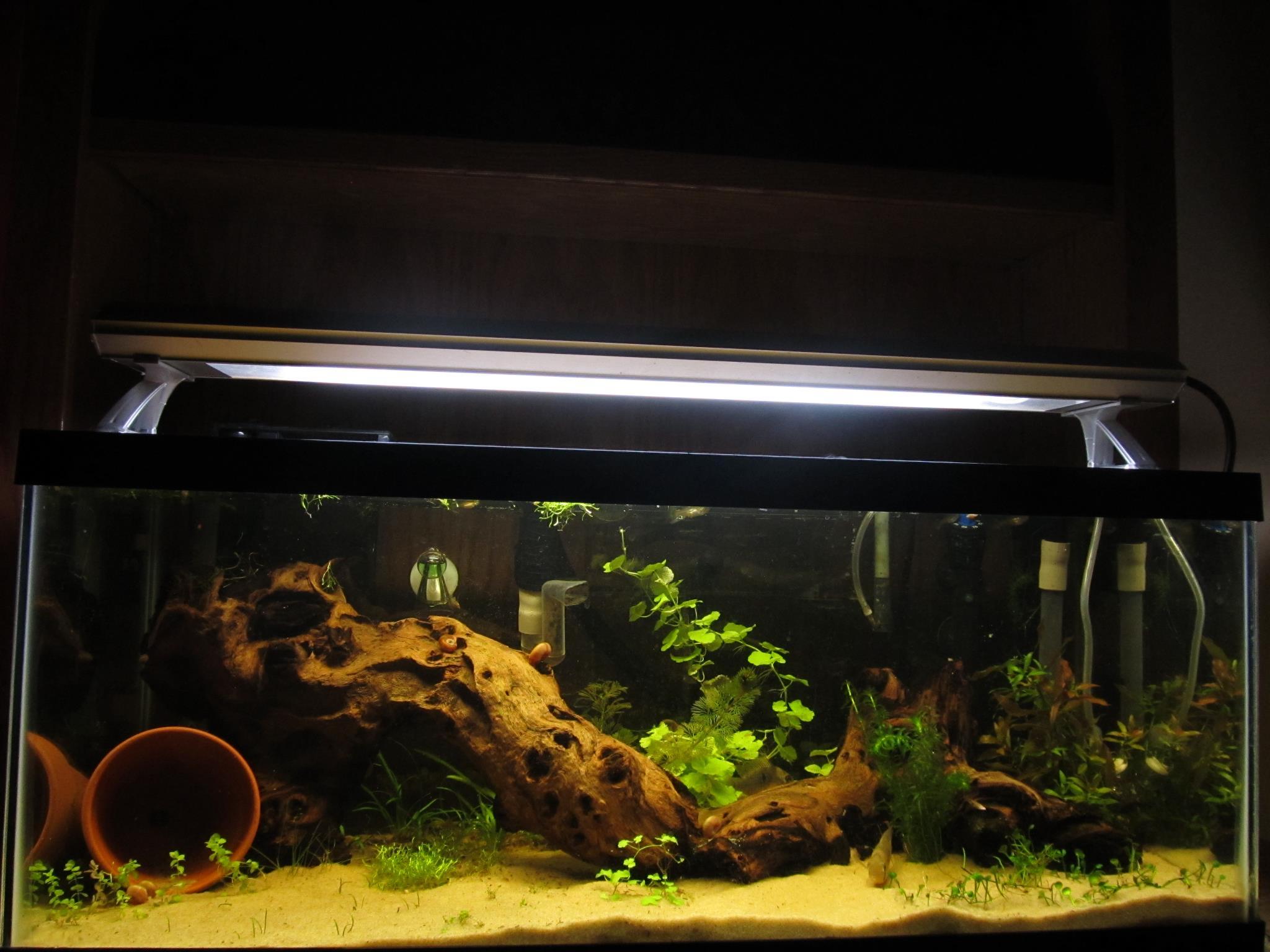 portable air tank decor decoration oxygen fish fashion behokic aquarium for shape coral bubbling products ornament pump