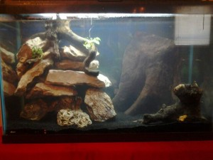 Introduction to adding natural decor to an aquarium for Well water for fish tank