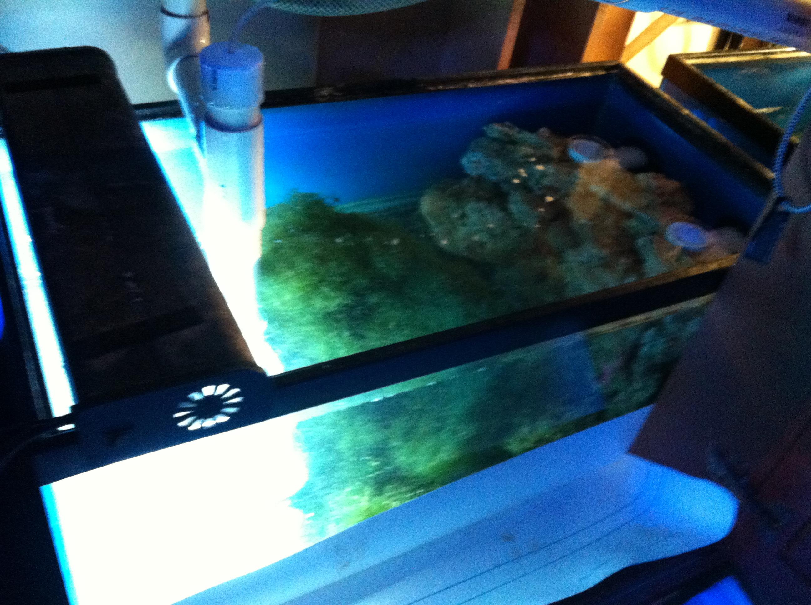 5 gallon fish tank 450 450 gallon reef tank aquarium for 10000 gallon fish tank
