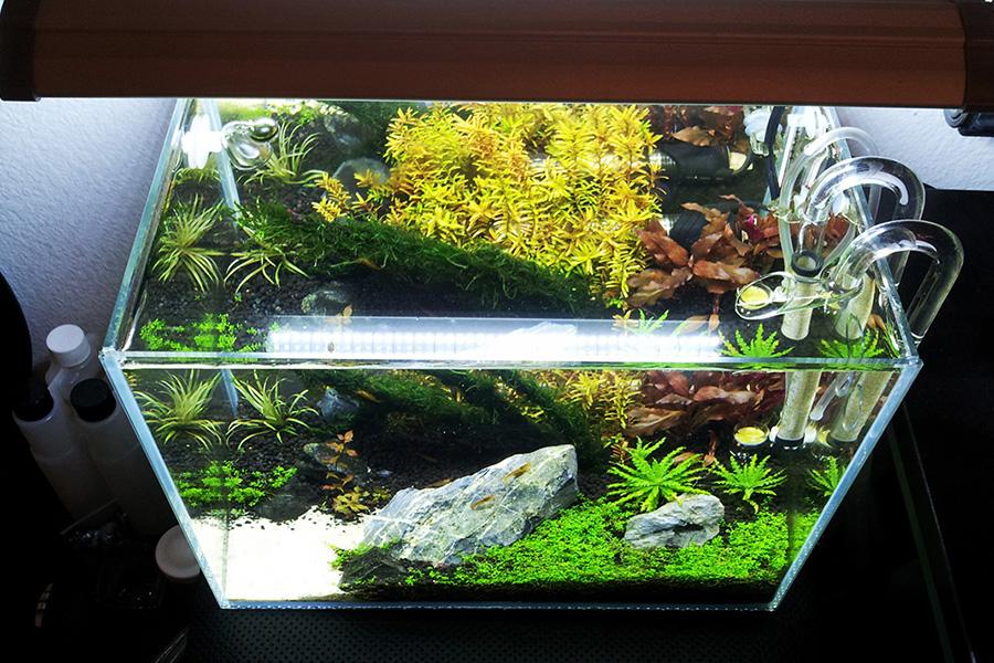 March 2013 totm brian nano12g 39 s 6 gallon planted nano for Racine pour aquarium