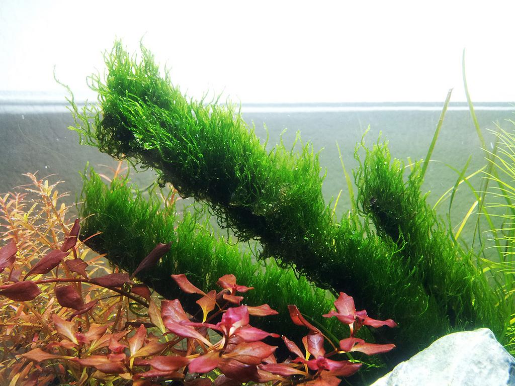 March 2013 totm brian nano12g 39 s 6 gallon planted nano for Plante nano aquarium