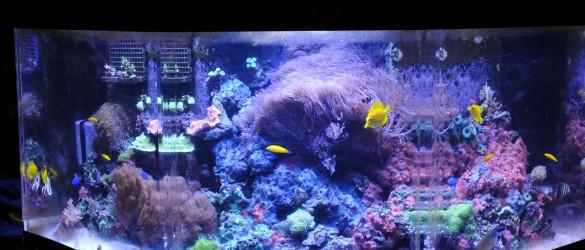 Main Reef Tank