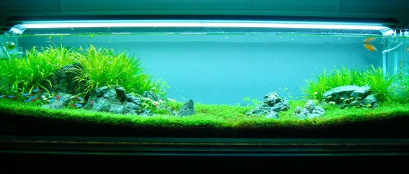 July 2013: BillBug68's Rimless 12 gal long Iwagumi - Aquarium Advice 10 Gallon Fish Tank Ideas