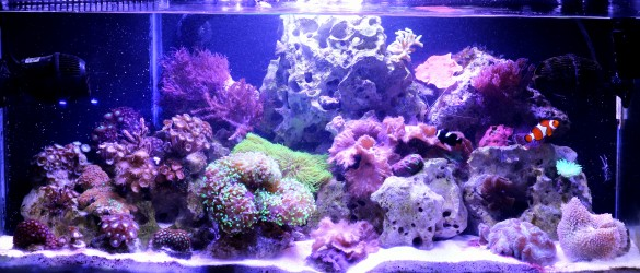 August 2013 evansimp 20 gal 40 gal reef aquarium advice for 20 gallon saltwater fish tank