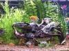 Delapool community tank