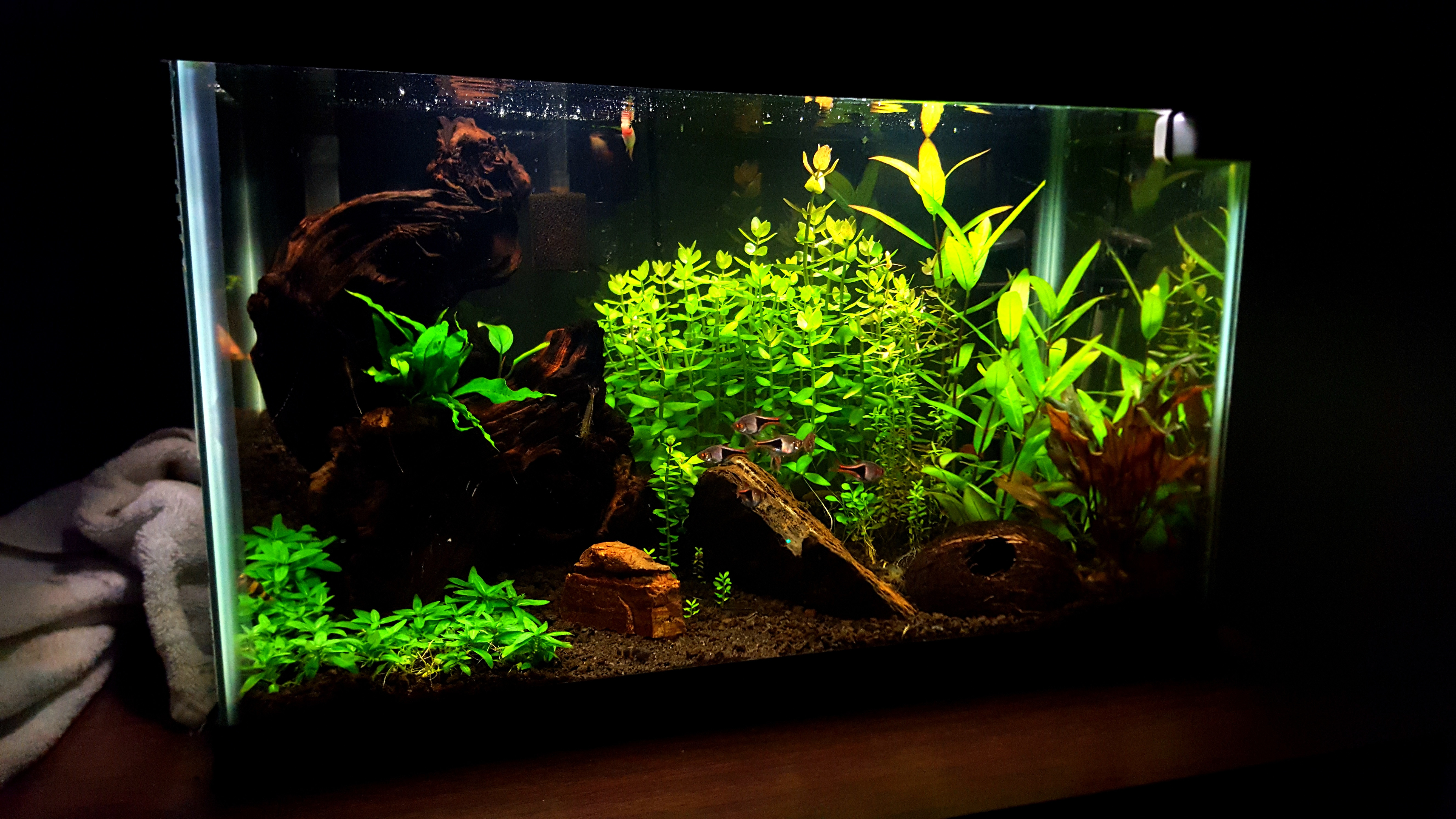february 2017 totm snailpufferguy aquarium advice